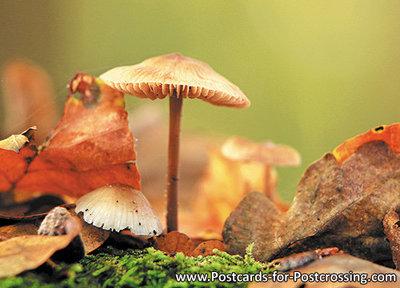 Herfstkaarten, ansichtkaart paddestoelen in de herfst