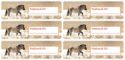 Postcard ID stickers - 6x Konik pferd