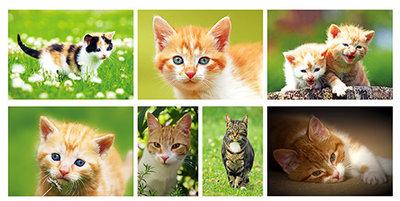 Katten kaarten set - Cat Postcard set - Katzen Postkarten Set