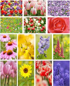 Bloemen kaartenset - Flower postcard set - Blumen Postkarten Set
