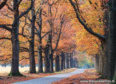 herfst kaart - Prachtige postkaart / ansichtkaart van een herfst laantje