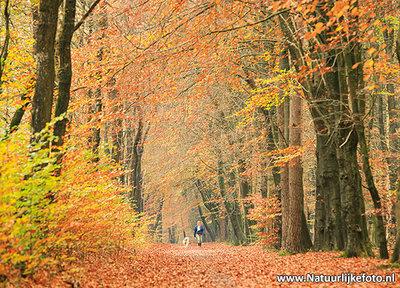 ansichtkaart herfstlaantje met wandelaar met hond