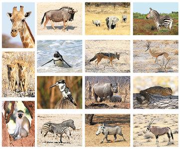 postkarten set Afrikanische Tiere