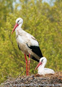 Ansichtkaart Ooievaars op nest, Storks on nest postcard, Postkarte Störche im Nest