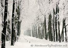ansichtkaart winter laantje, postcardwinter lane, Postkarte winter lane, Veluwe