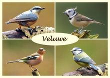 ansichtkaart vogels op de Veluwe, birds on the Veluwe, Vögel auf der Veluwe