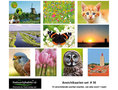 kaarten set 36 - Postcard set 36 - Postkarten set 36