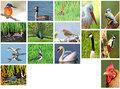 Postkarten-set-vögel-(24)